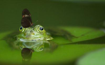 Manipulacje w pracy, które sprawiają, że stajemy się ugotowaną żabą